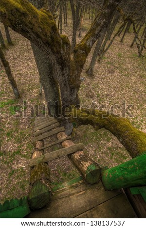 View from a mossy treehouse
