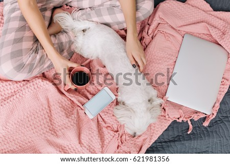 View from above little white dog chilling on pink blanket on bed surround phone, laptop. Enjoying home time with domestic pets of pretty woman with cup of coffee relaxing in bedroom