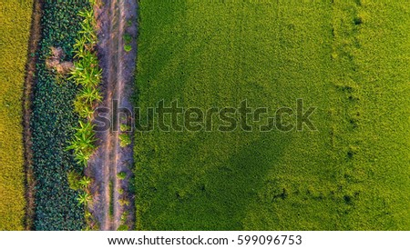 View from above of the rice fields in Thailand  #599096753