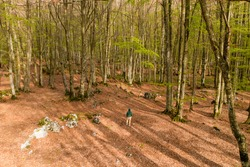 View from above, stunning aerial view of a person walking in a forest surrounded by beautiful Fagus Sylvatica trees. Travel concept, outdoor pursuit, recreational pursuit.