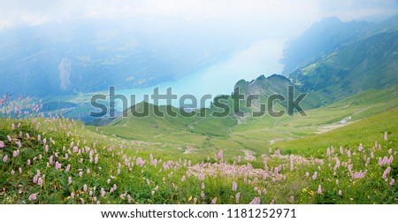 view from brienzer rothorn mountain to lake brienzersee, bernese oberland. meadow with pink knotweed, on a cloudy day