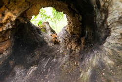 view from inside a tree hollow burl - selective focus