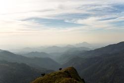 View from mount Little Adam's Peak. Mountain landscape in Sri Lanka.