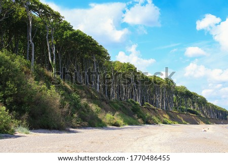 View from the beach to ghost forest (Gespensterwald) Nienhagen, Baltic Sea - Mecklenburg Western Pomerania, Germany  stock photo