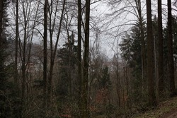 View from the Black Forest on a church in the village. Leafless trees and fir trees.