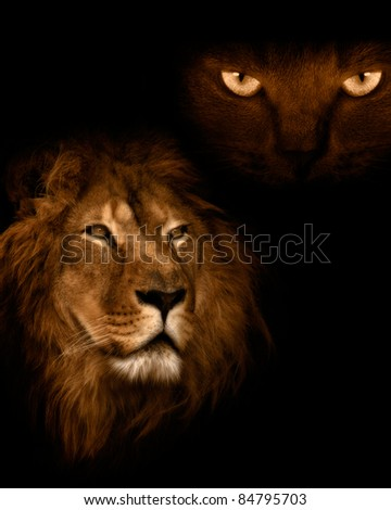 View from the darkness. Lion on a black background.