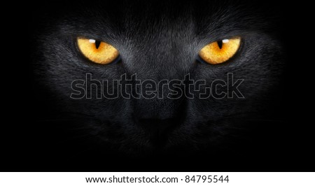 Stock Photo View from the darkness. muzzle a cat on a black background.