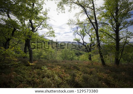 view from the edge of a forest summer landscape