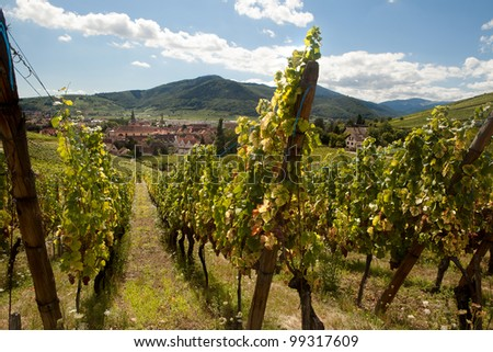 View from the famous wine route in the Alsace region in France