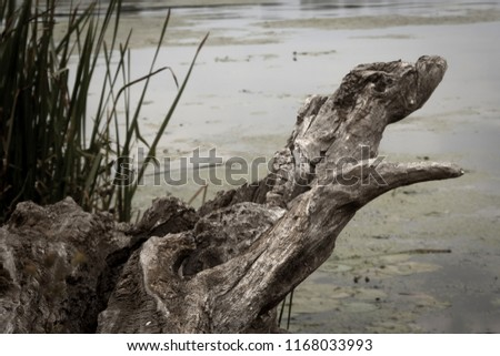 View from the left bank with a dry wooden tree falling into the water #1168033993
