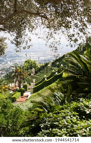 View from the middle part of Bahai gardens in Haifa, Israel. Palms, stairs and olive branches. Stock fotó ©