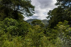 View from the rainforest through the treetops to the mountains
