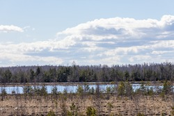 View from tower to peat bog forest and swamp lake. Peat bog, blue bog water and bog plants during early spring day with white puffy clouds on light blue sky