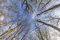 view in treetops in the forest into the sky upwards