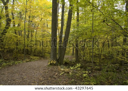 View inside forest thicket following a hiking trail with tree foliage in autumn transition and patches of sky visible