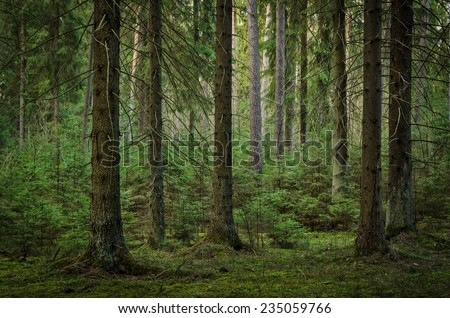 view inside of the forest on the trees #235059766