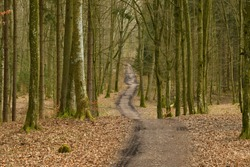 View of a beautiful dirt road or path with some wehicle trails seen between two rows of moss covered deciduous trees in the middle of a leaf covered park seen on a Polish countryside in spring