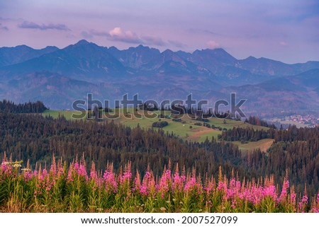 View of a beautifully flowering meadow with a background of high peaks. Sunrise, mountain meadows and wild forests. View of the High Tatras from Gliczarow Górny in summer. Poland  Zdjęcia stock ©