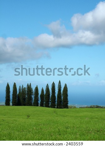 View of a bright green meadow with ocean in the background