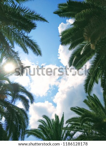 View of a clear blue sky with beautiful white cumulus clouds surrounded by green palm tree tops on a sunny day, bottom up view. Hello summer or tropical background. #1186128178