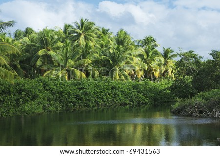 View of a clearing in a tropical jungle forest in Dominican Republic - stock photo