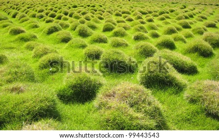 View of a decorative grass landscape in a park of Lisbon in Portugal