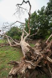 View of a fallen tree
