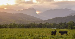 View of a farm with cows in North Queensland at sunset