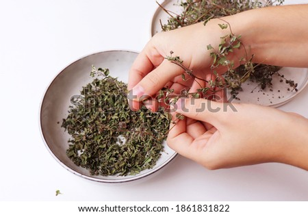 View of a girl's hands scrubbing dried marjoram for flavouring foods.  Origanum majorana is a perennial herb with sweet pine and citrus flavours. It is also called pot marjoram. Stock photo ©