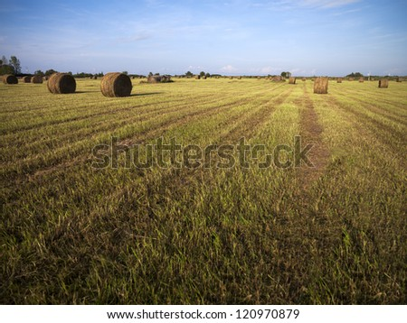 View of a hay field with blue sky in the background.