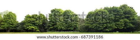View of a High definition Treeline isolated on a white background #687391186