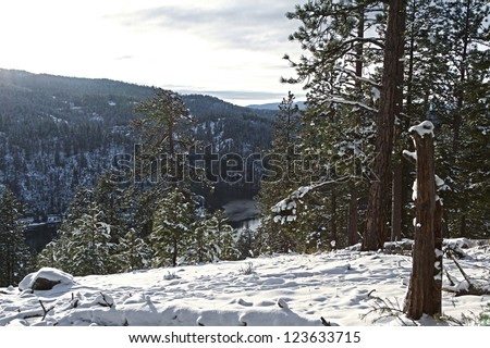 view of a hill side in northern idaho mid december with fresh snow