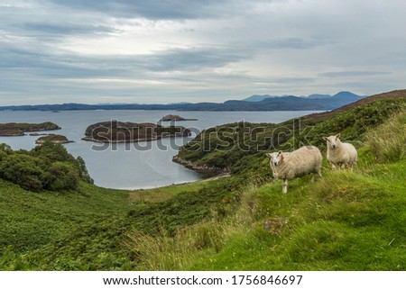 View of a landscape in the Highlands. The green hills, cloudy skies, river and lakes. Some sheep look towards the camera.