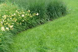 View of a lawn and a flowerbed with lilies and ornamental grass
