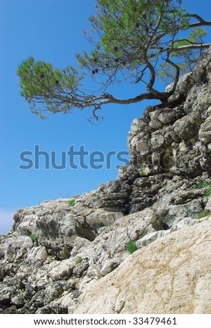 View of a lonely tree in a rock in Croatia.