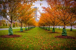 View of a park of Chicago in autumn