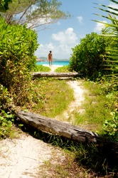 View of a path leading to the Anse Petite white sand beach in La Digue Island, Seychelles, where a tree trunk lying on the ground is blocking the way and a girl stands in the distance.