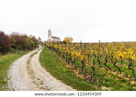 view of a picturesque white country church surrounded by golden vineyard pinot noir grapevine landscape with a gravel country road in the foreground