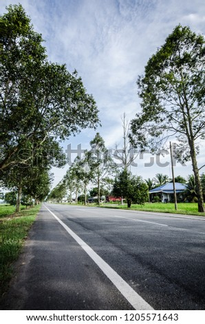 View of a road with some trees at the both side of it during daytime. the road is also located next to green paddy field. #1205571643