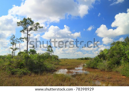 "View of a ""slough"" in the Florida Everglades. A slough is a slow moving body of water in a bed of saw grass"