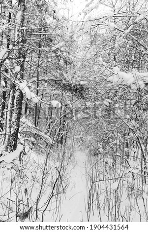 View of a snowy forest in winter Zdjęcia stock ©