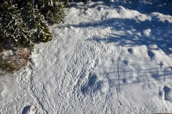 view of a snowy meadow with long snowy human footprints. Drone view creates a pattern of dispersion and paths of human footsteps on a pasture in winter in the woods
