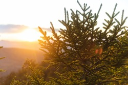 view of a sunset from uphill with a pine tree in the foreground