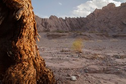 View of a tree trunk in the foreground and the arid desert sand and sandstone hills in the background, at sunset.