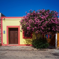 View of a typical colorful house of Linosa, colored with red and yellow. Oleander tree next to the doow