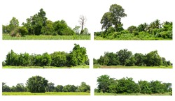 View of a Very high definition Treelined collection isolated on a white background, group of green trees collection.