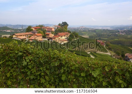 View of a vineyard in Langhe, Piedmont, Italy