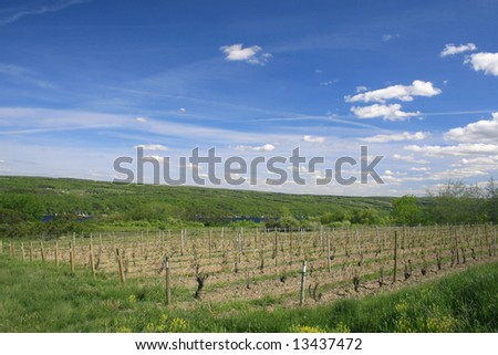 View of a vineyard, wine making industry, across from the Keuka Lake, one of beautiful finger lakes in upstate New York