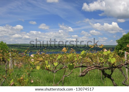VIew of a vinyard, wine making industry, across from the Keuka Lake, one of beautiful finger lakes in upstate New York - stock photo