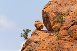View of a wild fig tree growing from a cliff face with a loose boulder precariously balanced on a ledge in Mapungubwe National Park, South Africa